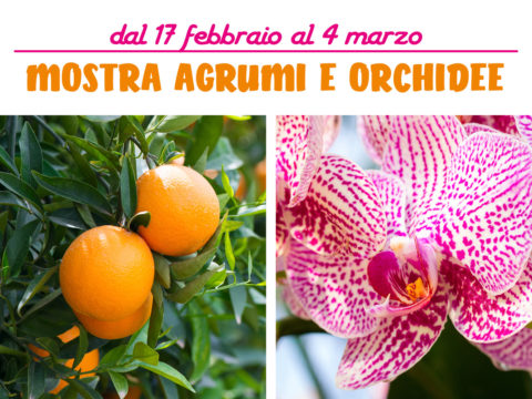 Mostra Agrumi Orchidee