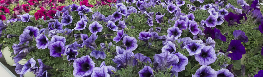piante stagionali