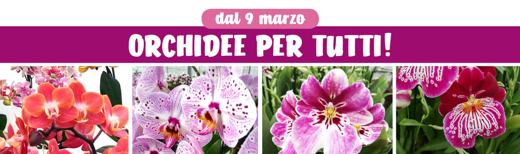 Orchidee per tutti!